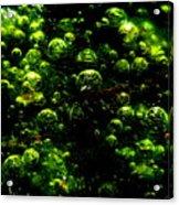 Algae Bubbles Acrylic Print by Catherine Natalia  Roche
