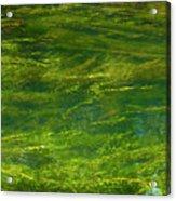 Algae Acrylic Print