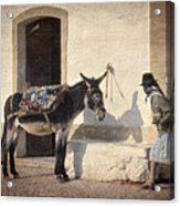 Algarve Donkey Acrylic Print