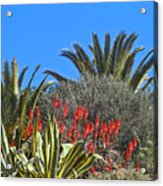 Algarve Plants Acrylic Print