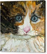 Ali Cat 1 Acrylic Print