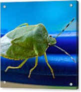 Alice The Stink Bug 3 Acrylic Print