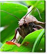 Alien Moth Acrylic Print