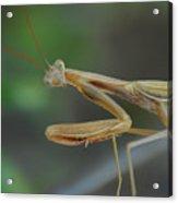 Aliens Among Us Acrylic Print