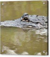 Alligator Stealth Acrylic Print