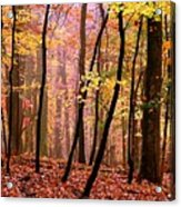 All Fall Acrylic Print
