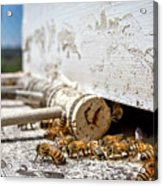 All In A Days Work Acrylic Print