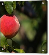 All Natural Peach Acrylic Print