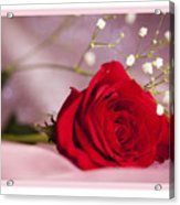 All Occasion Rose Acrylic Print