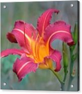 All Summer Lily Acrylic Print