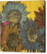 All The Pretty Flowers Acrylic Print