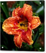 All Wet Lily Acrylic Print