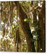 Allamanda And Oak Tree Acrylic Print