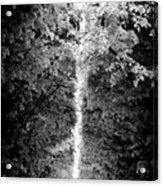 Allee_des_arbres Acrylic Print