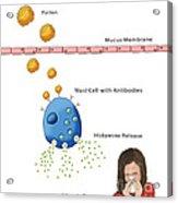 Allergic Response, Illustration Acrylic Print