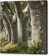 Alley Provence  Acrylic Print