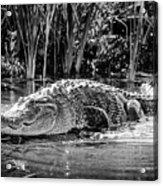 Alligator Bags Of Port Aransas Acrylic Print