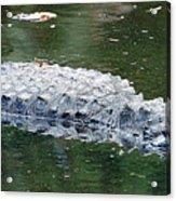 Alligator Crawl Acrylic Print