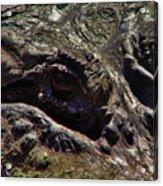 Alligator Eye Acrylic Print