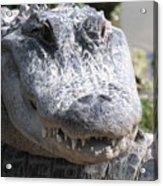 Alligator Smile Acrylic Print