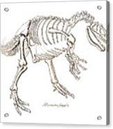 Allosaurus Skeleton Acrylic Print