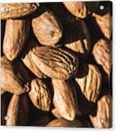 Almond Nuts Acrylic Print