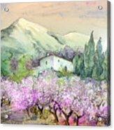 Almond Trees In Altea La Vieja Acrylic Print