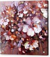 Almonds Blossom  7 Acrylic Print