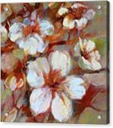 Almonds Blossom1 Acrylic Print