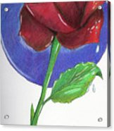 Almost Black Rose Acrylic Print
