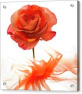 Almost Perfect Acrylic Print