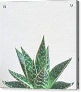 Aloe Tiki Acrylic Print