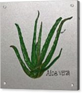 Aloe Vera Acrylic Print