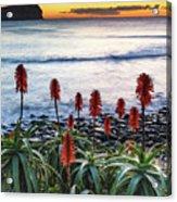 Aloe Vera In Flower At The Seaside Acrylic Print