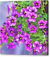Aloha Purple Sky Calibrachoa Abstract I Acrylic Print