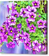 Aloha Purple Sky Calibrachoa Abstract II Acrylic Print