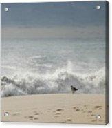 Alone - Jersey Shore Acrylic Print