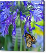 Alone In The Garden Acrylic Print