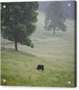 Alone In The Meadow Acrylic Print