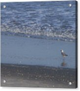 Alone In The Sand Acrylic Print