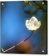 Alone In The Wind Acrylic Print