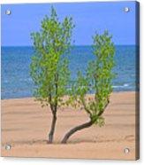 Alone On The Beach Acrylic Print
