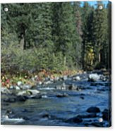 Along Deer Creek Acrylic Print
