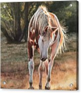 Along The Dusty Trail Acrylic Print