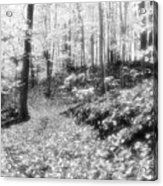 Along The Path Bw  Acrylic Print