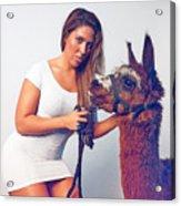 Alpaca Mr. Tex And Breanna Acrylic Print