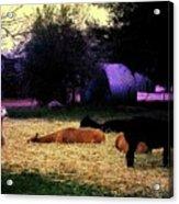 Alpacan Twilight Acrylic Print