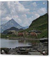 Alps' Horses Acrylic Print