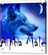 Alpha Male Acrylic Print