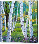 Alpine Flowers And Birches  Acrylic Print